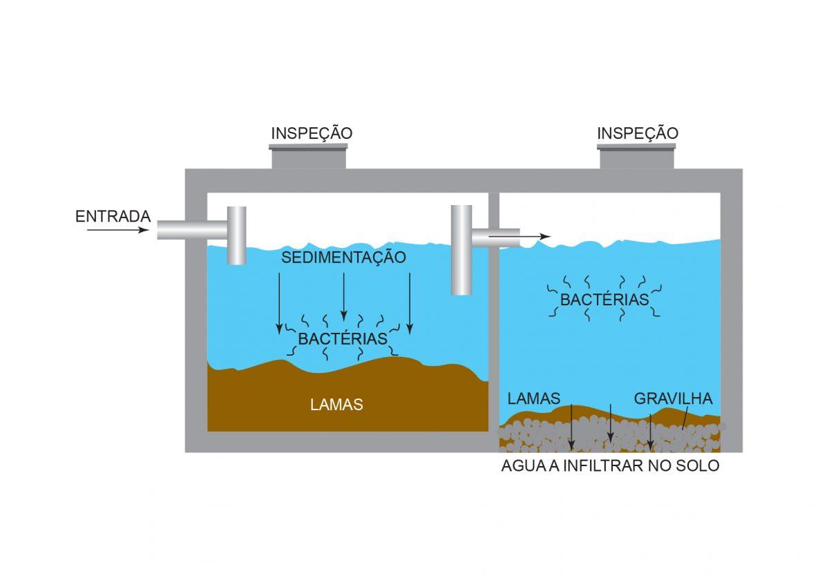 bacterias-fossa-septica