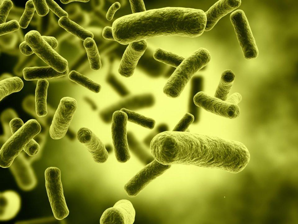 bacterias-liofilizadas